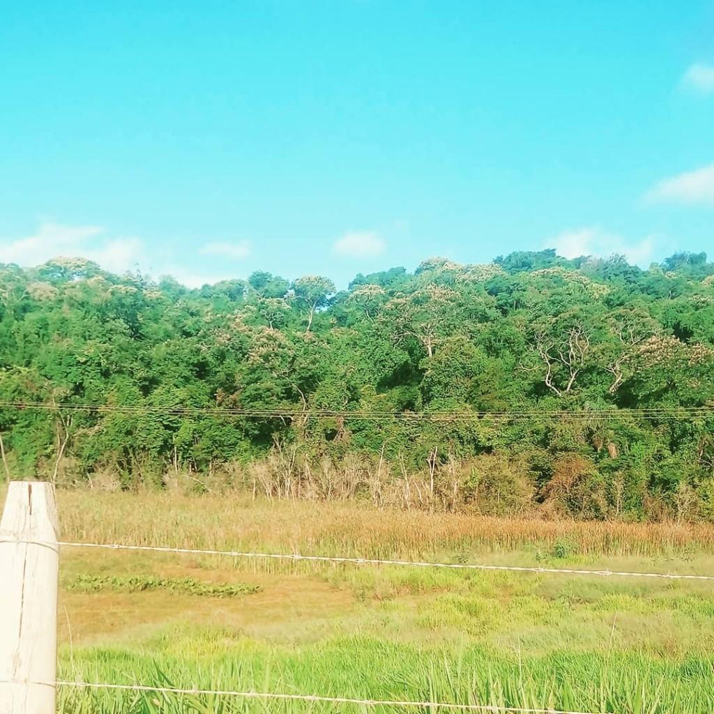 Terrinha  boanoite gratido natureza nature verde azul atibaia atibashellip