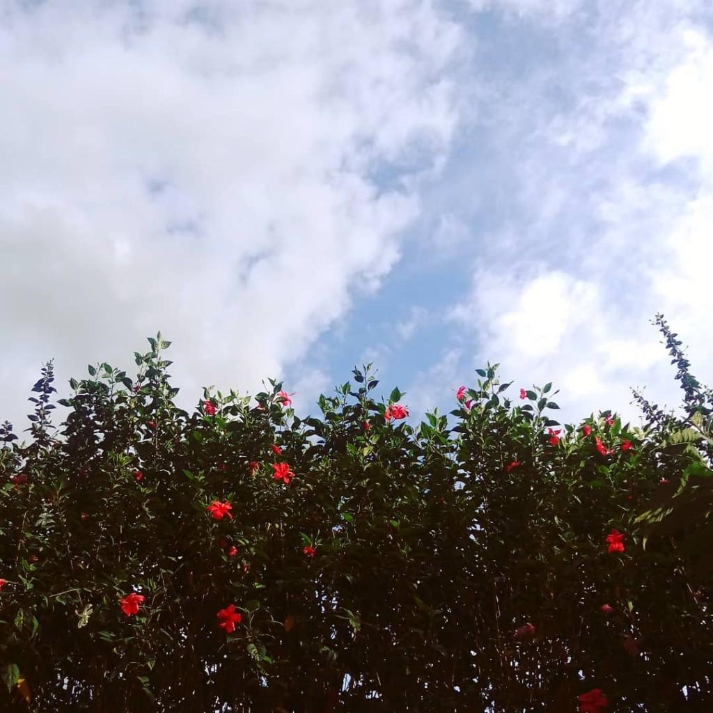 boanoite instabgs panelaobgs natureza nature flor flower tnksgod gratidohellip