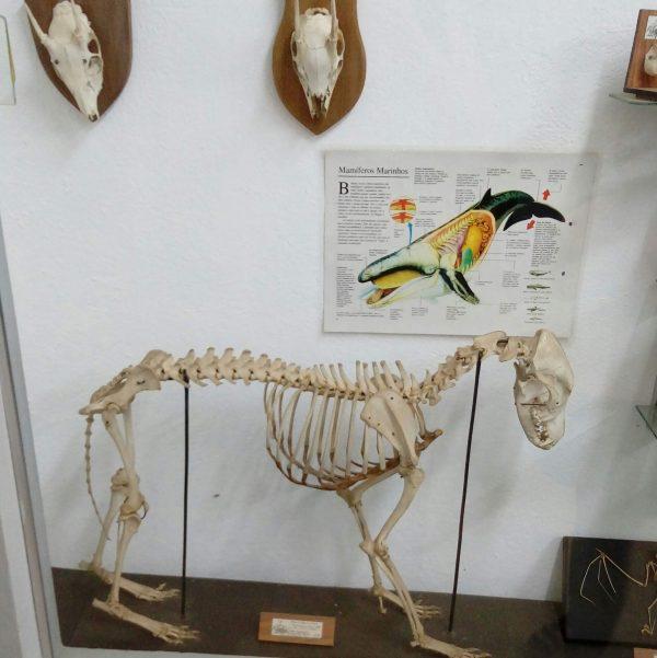 museu do parque edmundo zanoni